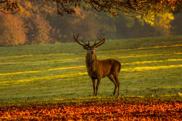 stag-1764608_1920